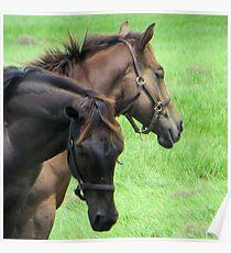 Equine Beauties Poster