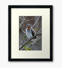 Feed me now! Framed Print