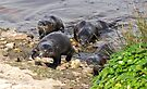 The otters are coming by Anthony Brewer