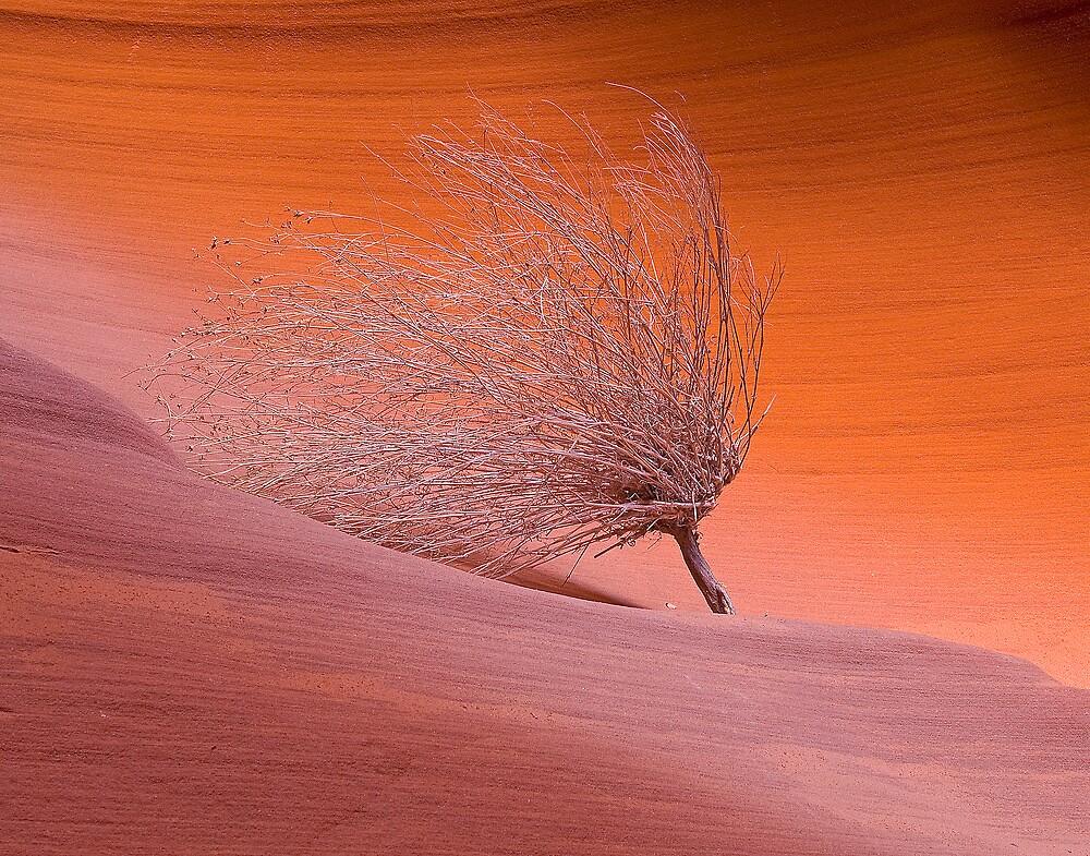 The Burning Bush of Secret Canyon by 8TenStudios