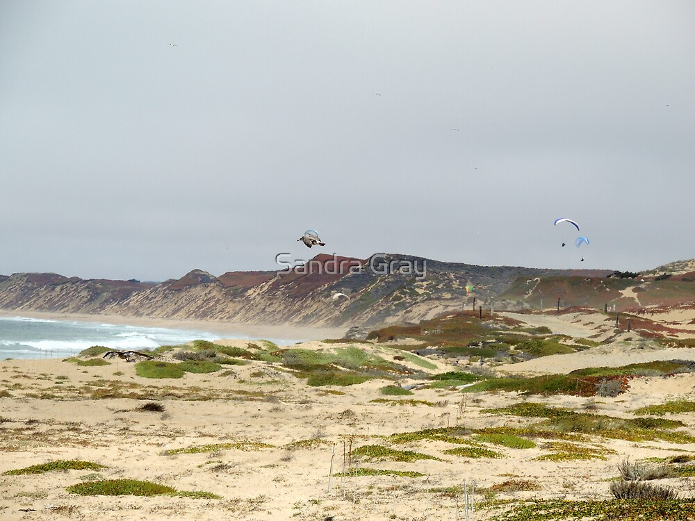 Any Given Thursday Hang Gliders from Seaside Beach by Sandra Gray