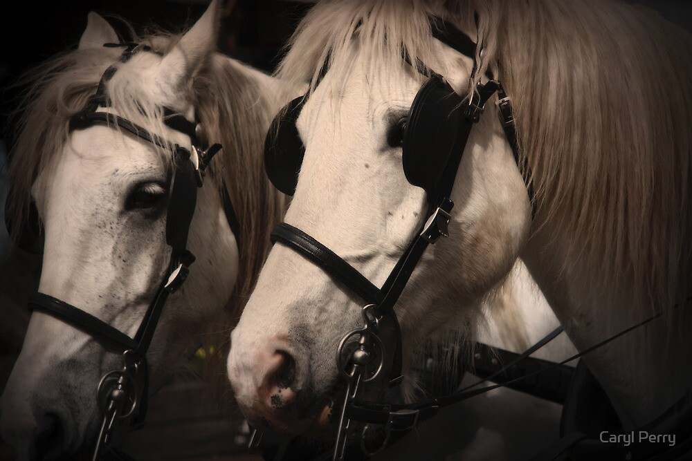 clydesdale horses by Caryl Perry