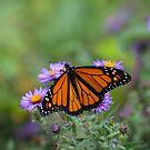 Monarch by Richard Lee