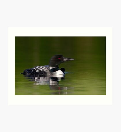 By her side - Common loon and chick Art Print