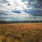 Fields of gold by MartinMuir