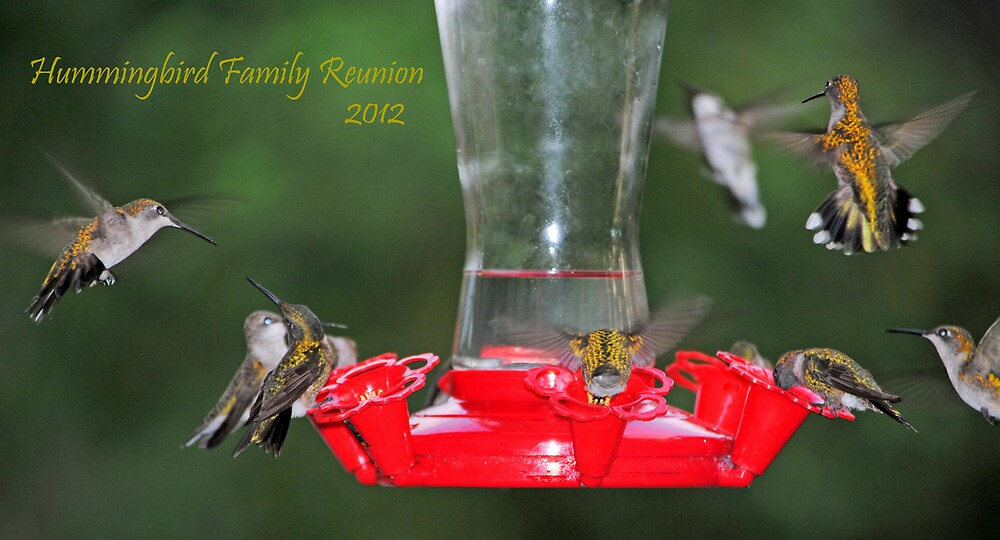 Hummingbird Family Reunion 2012 by DottieDees