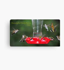 Hummingbird Family Reunion 2012 Canvas Print