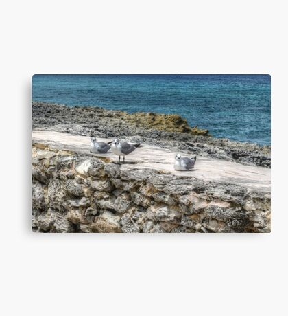 Seagulls in Paradise Island, The Bahamas Canvas Print