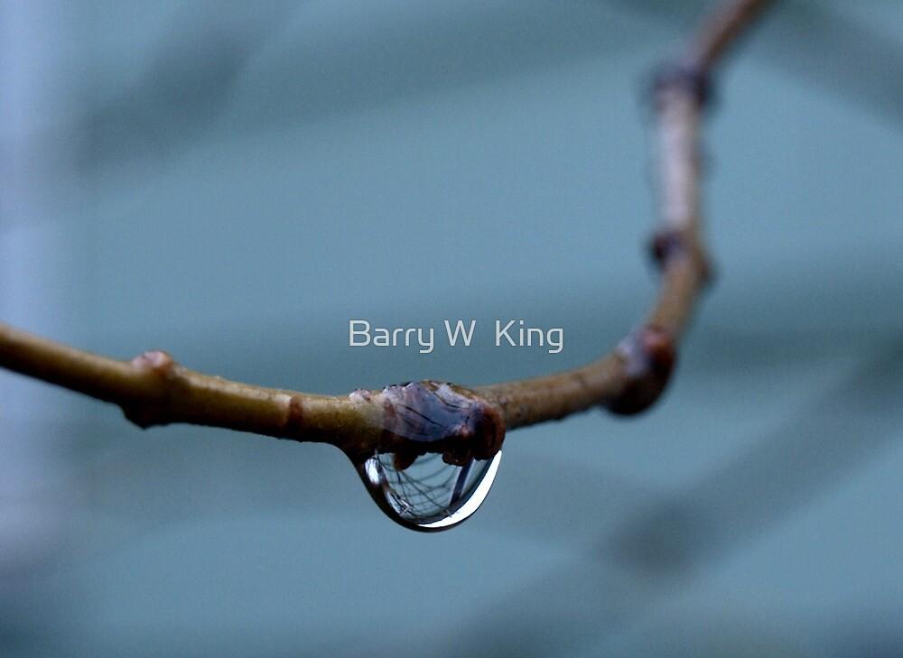 water drop by Barry W  King