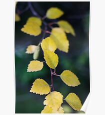 yellow branch Poster