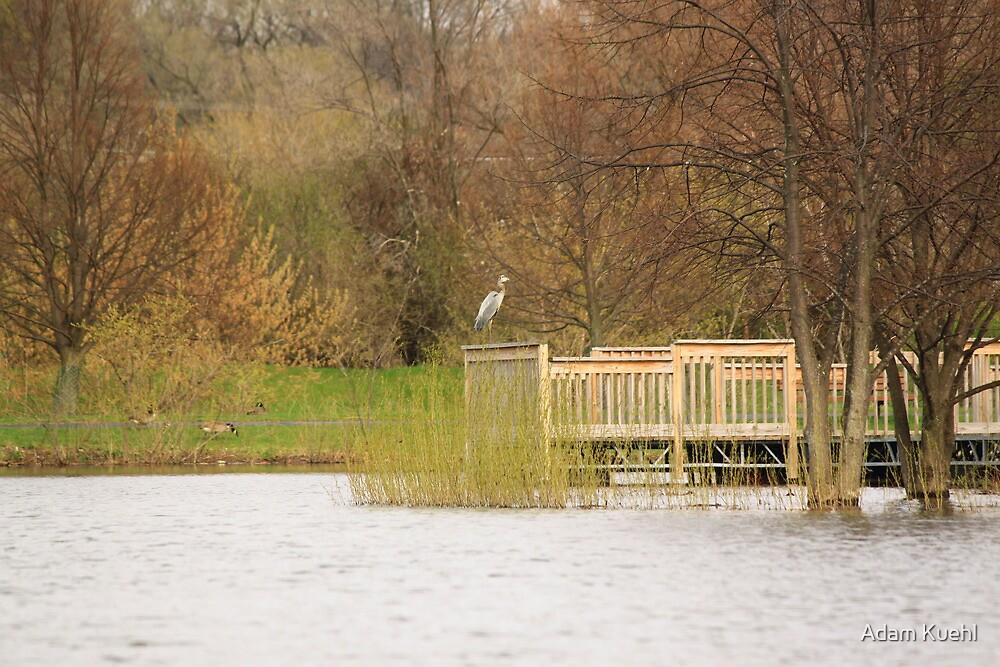 Perched Crane by Adam Kuehl