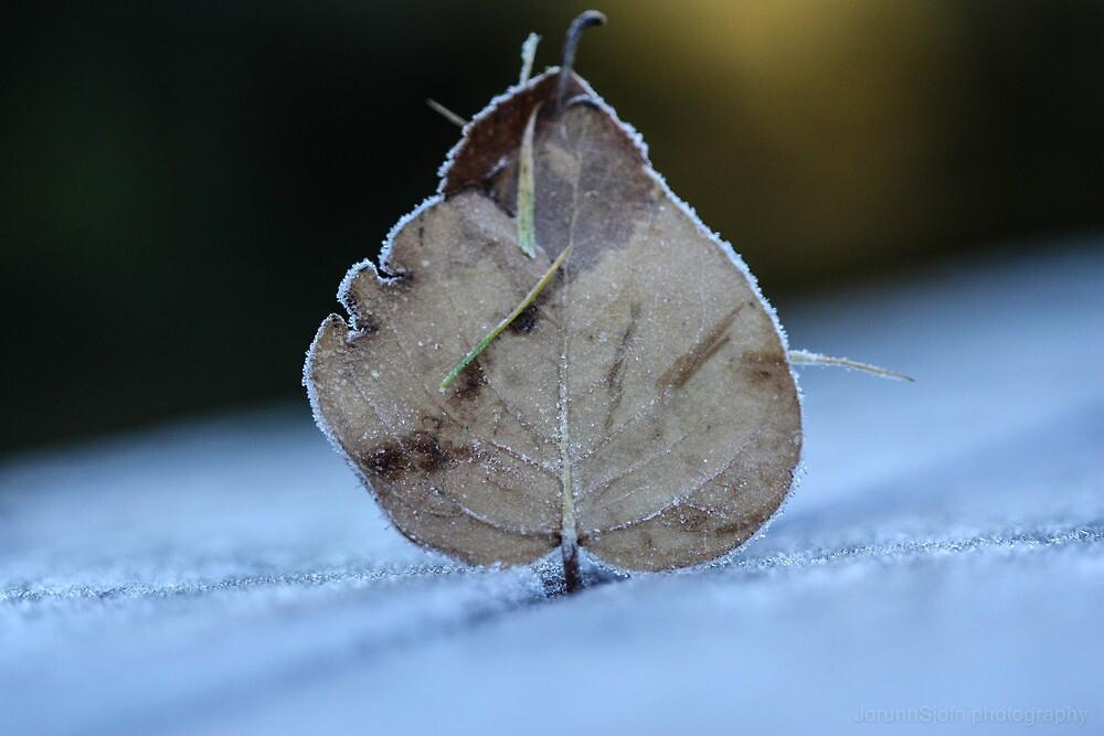 frosty leaf by JorunnSjofn Gudlaugsdottir