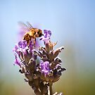 The Unbearable Lightness of Bee-ing by Christopher Burton