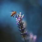 Bee in Blue by Christopher Burton