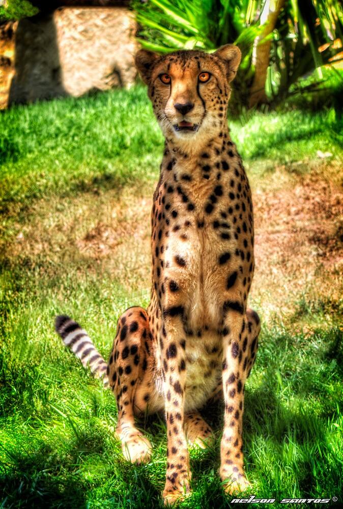 120kmh Cat by NSantos