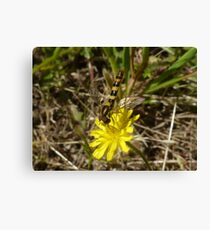 Yellow Wild Flower + Insect Canvas Print