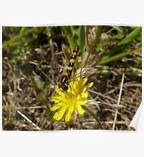 Yellow Wild Flower + Insect Poster