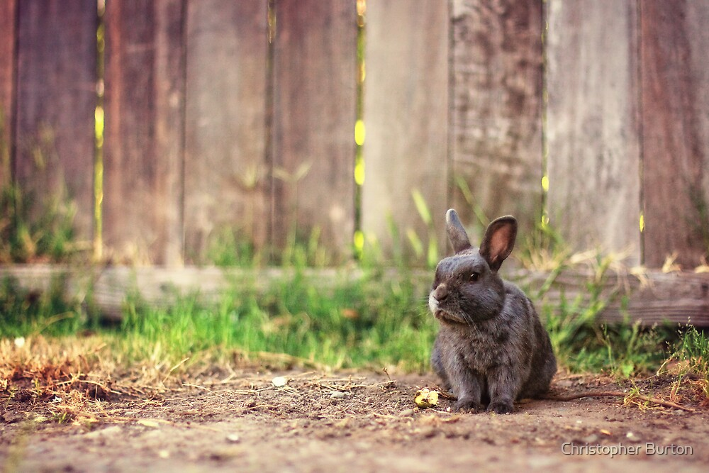 Some Bunny to Love by Christopher Burton