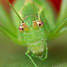 Grasshopper by Henry Jager