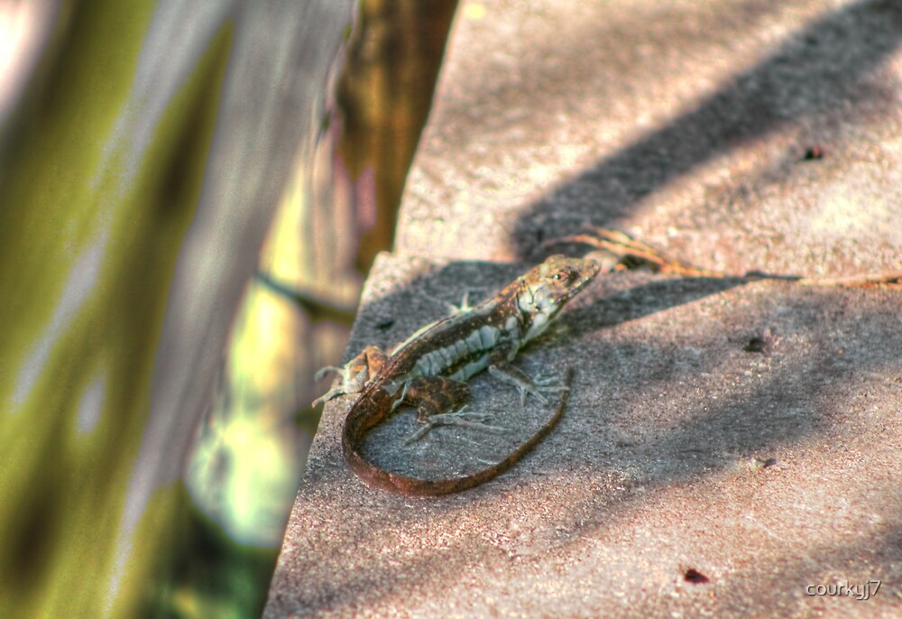 Friendly Lizard by courkyj7