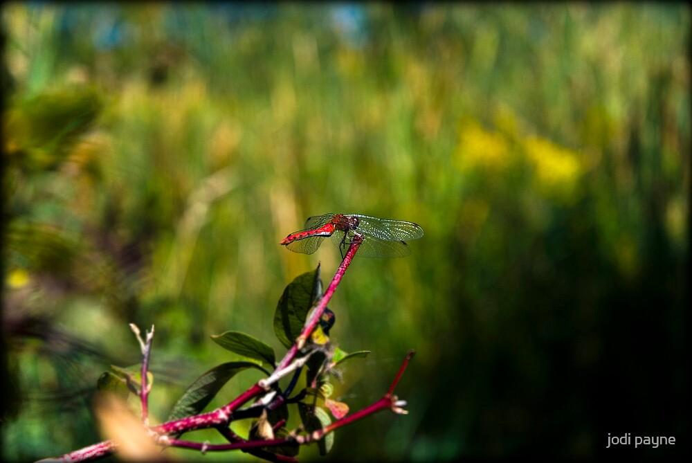 Red Dragon by jodi payne