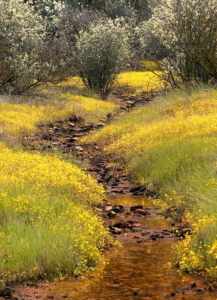 A Spring Wildflower Display by Floyd Hopper