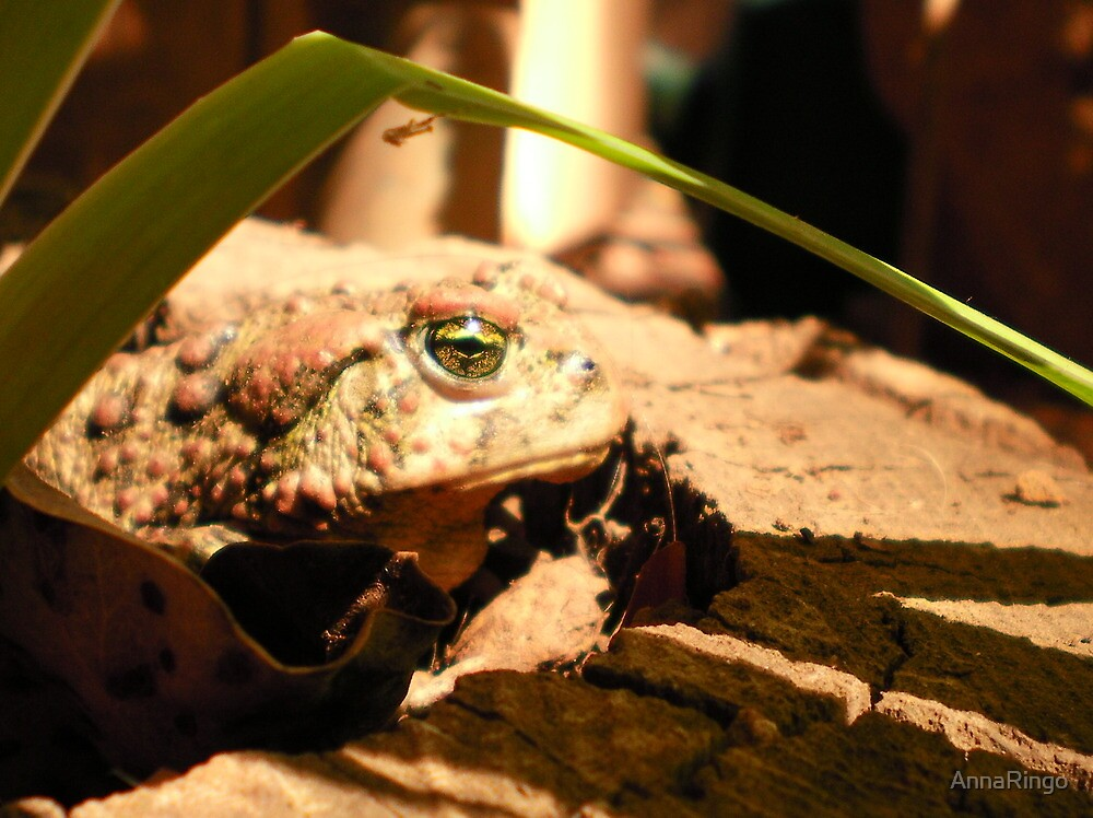 Good luck protector Toad..... by AnnaRingo