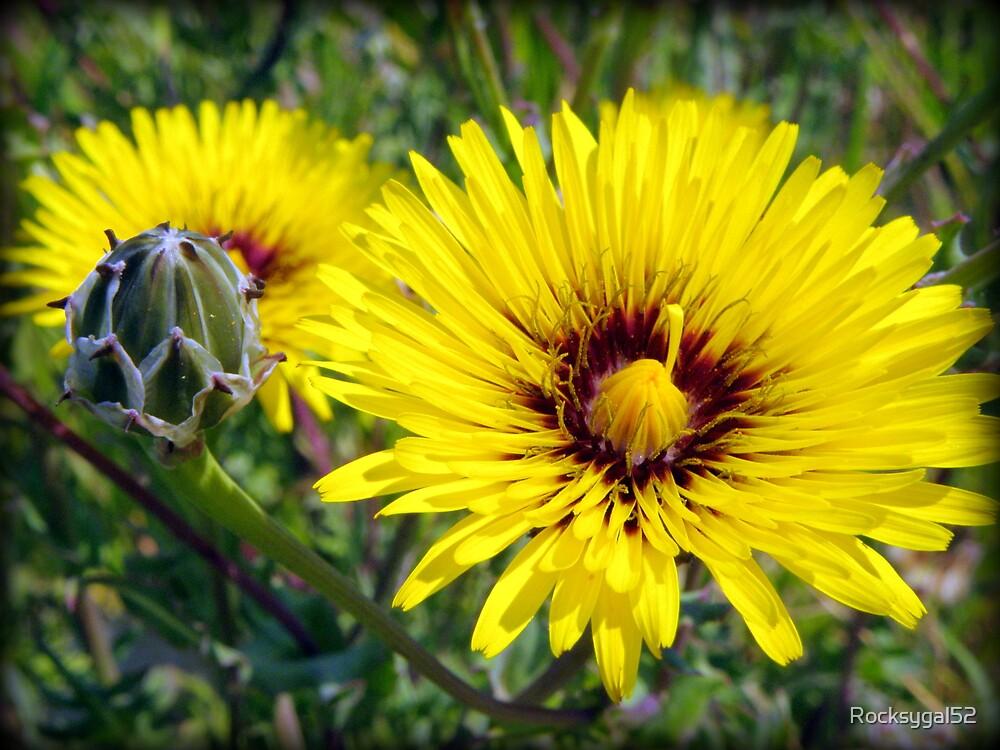 Golden Weeds 2 by Rocksygal52