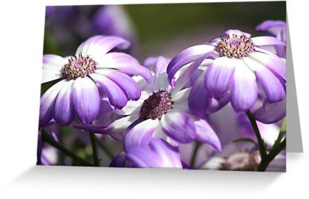 Three Purple Daisies by Mandy Gwan