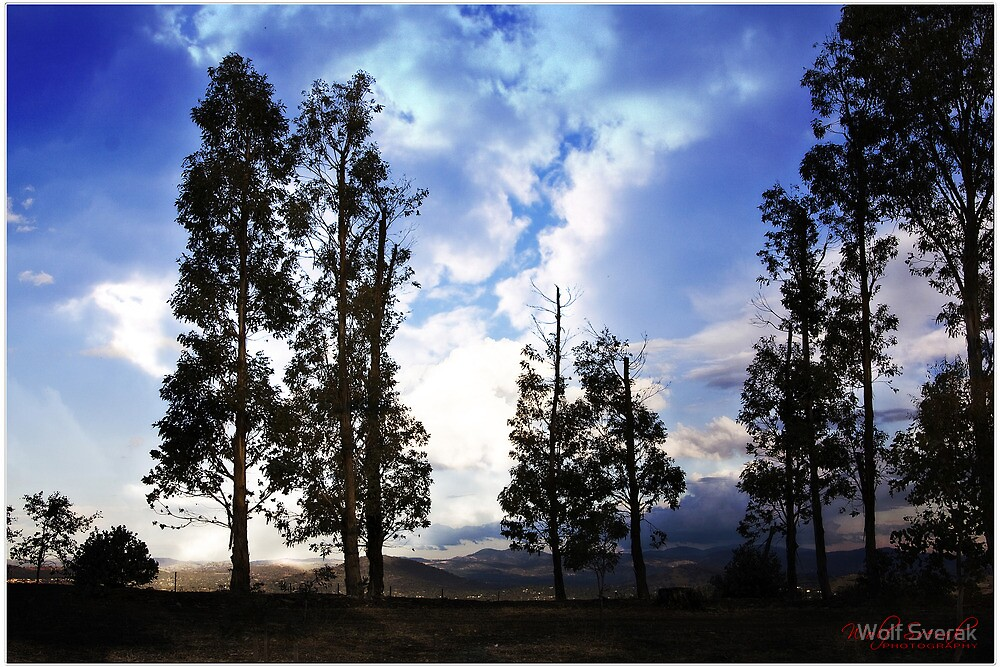 Trees at sunset at Mt Stromlo, Canberra/Australia by Wolf Sverak