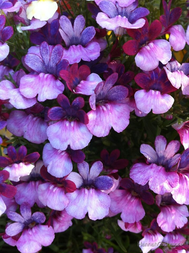 Purple flowers by HannahCashmore