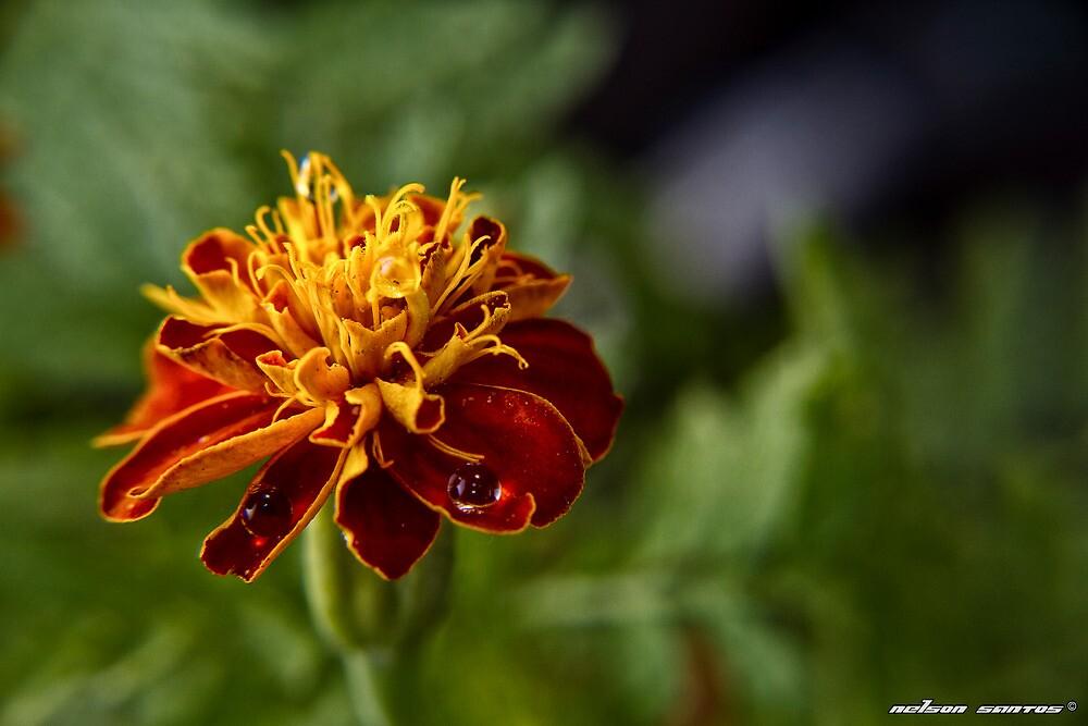 Bloom II by NSantos