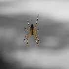 Incy Wincy Spider by KAGPhotography