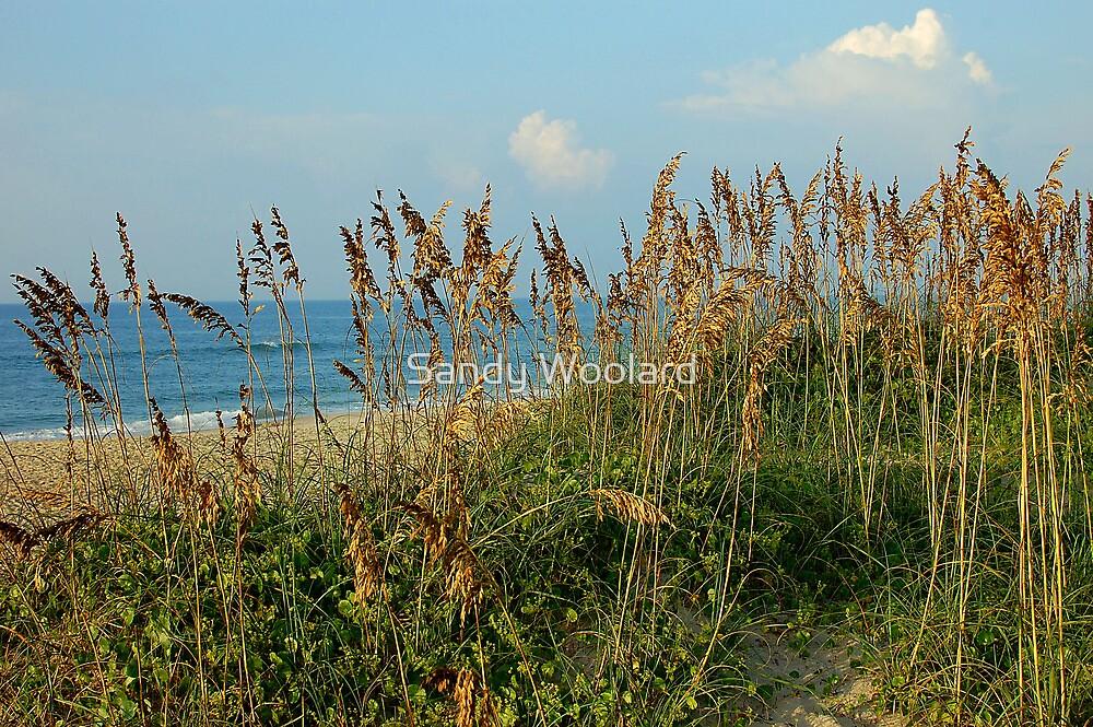 The Morning Stroll of Hatteras Island by Sandy Woolard