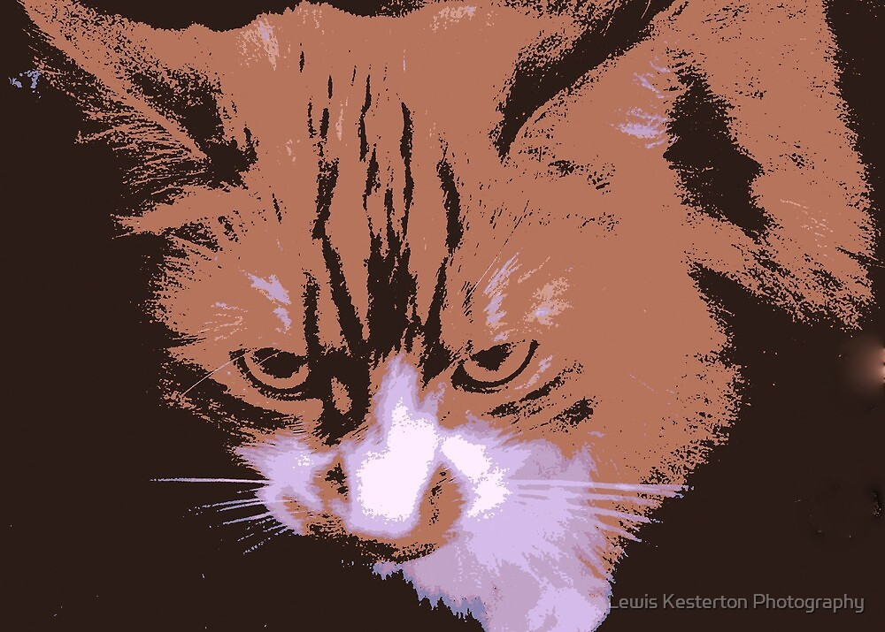 The Poster Cat by Lewis Kesterton Photography