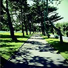 Tree Lined Pathway in the American Cemetery by JoeJoeT