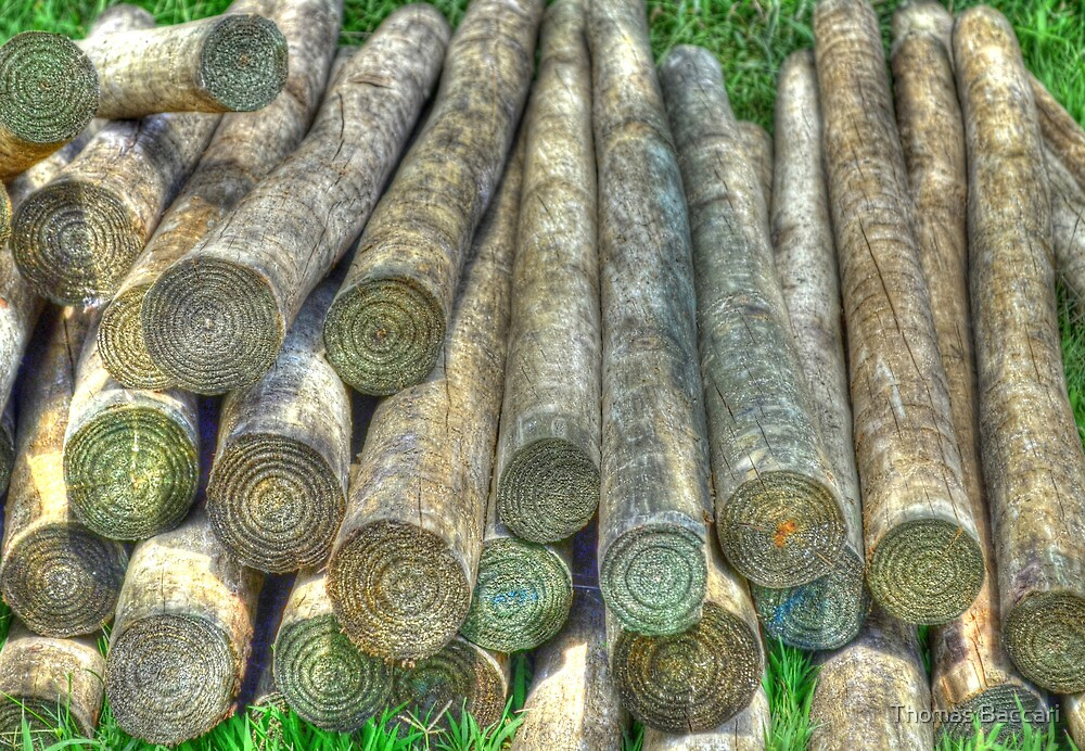 LOGS by TJ Baccari Photography