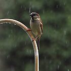 Enjoying The Rain On a Hot Summer Day by cymcgraw