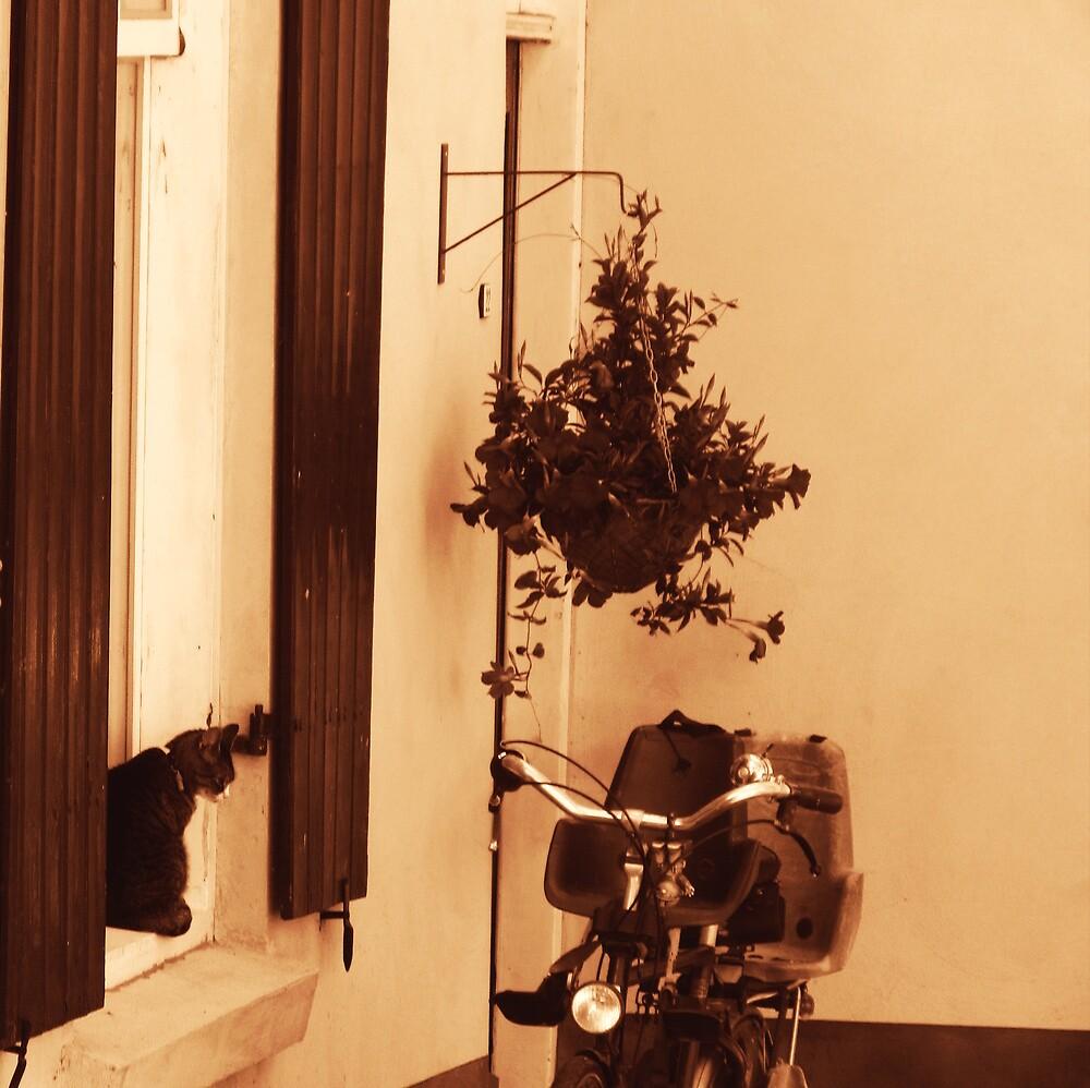 Cat on a window by cheryfayre