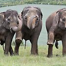 Three Elephants by Patricia Jacobs DPAGB BPE4