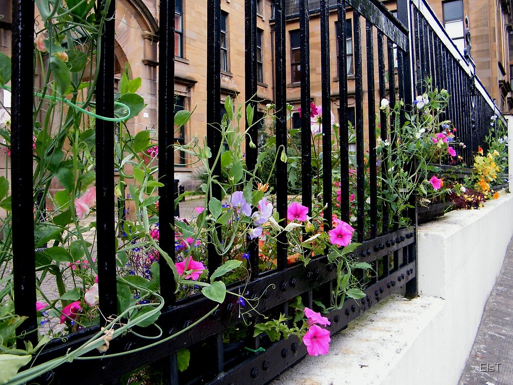 Flowery Fence, Glasgow by ElsT