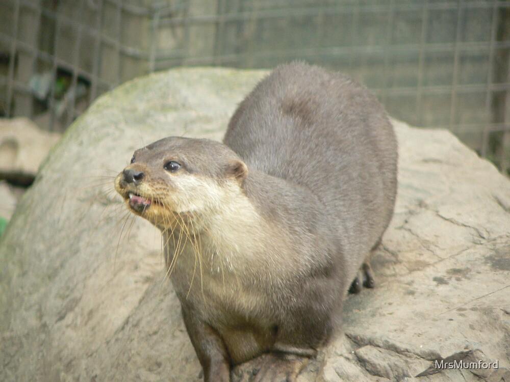 Otter by MrsMumford