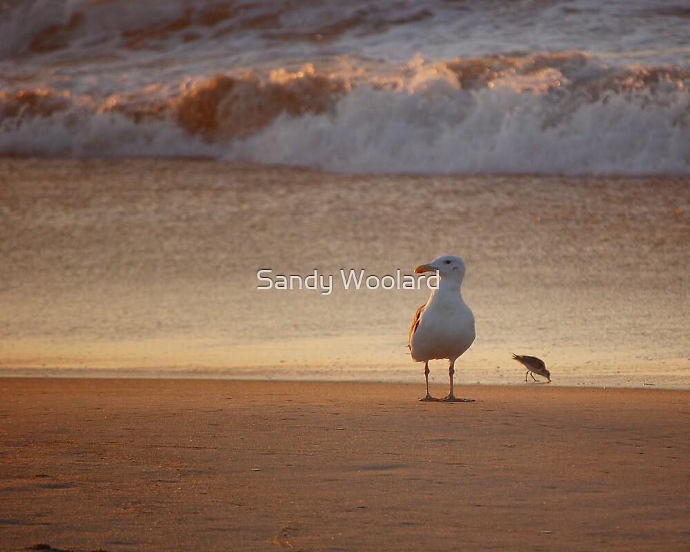 Morning Watch by Sandy Woolard