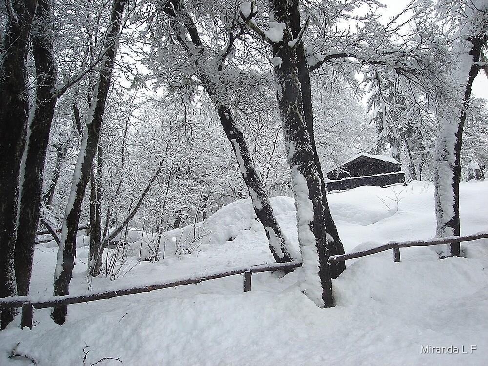 cold outside by Miranda L F
