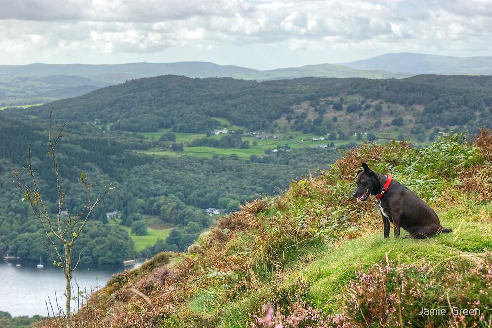 Tarn's View by Jamie  Green