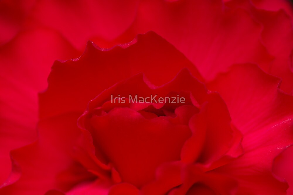 lost in reds... by Iris MacKenzie