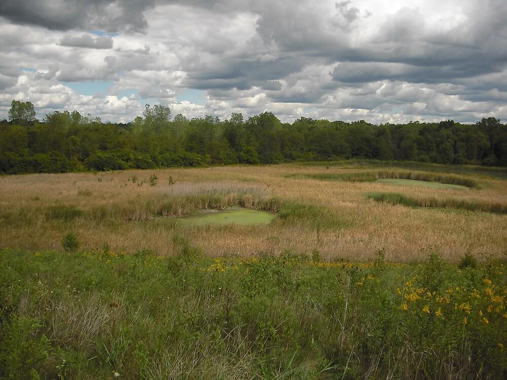Swampy Ground by AJBPhotography