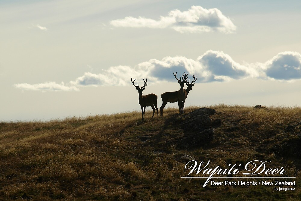 Wapiti Deer by joergilmaz