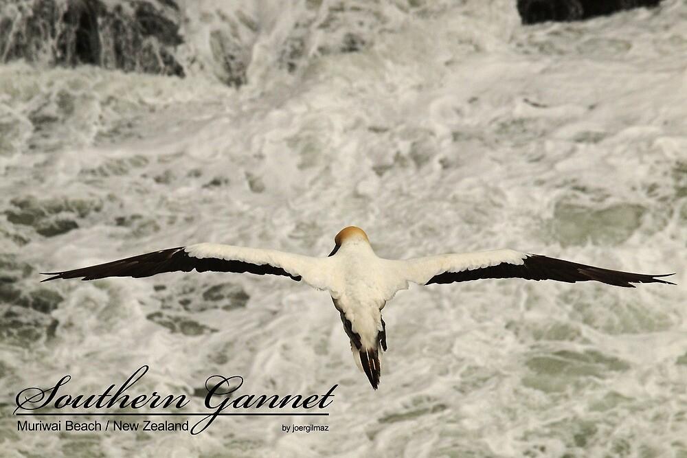 Southern Gannet by joergilmaz