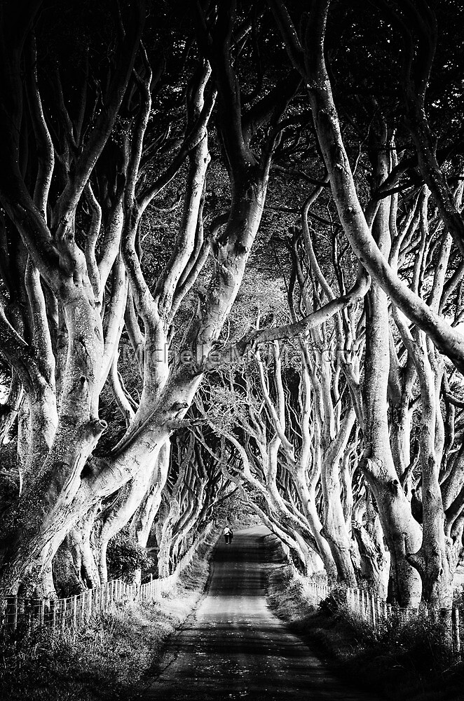 The Dark Hedges by Michelle McMahon